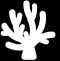 Reefs icon