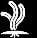 Seagrass icon
